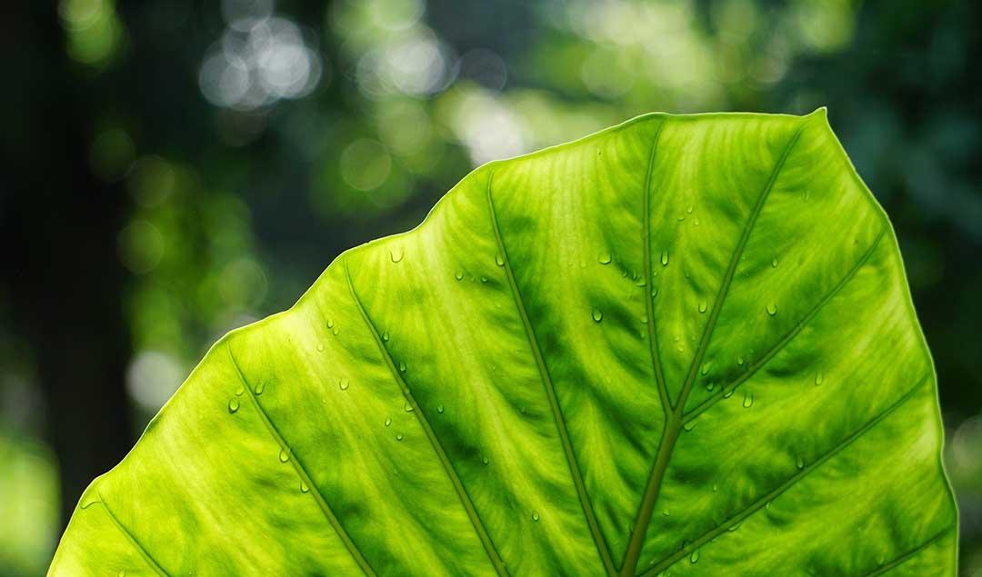 World Environment Day 2021: Ecosystem Restoration